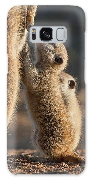 Meerkat Galaxy S8 Case - The Baby Is Hungry by Happy Home Artistry