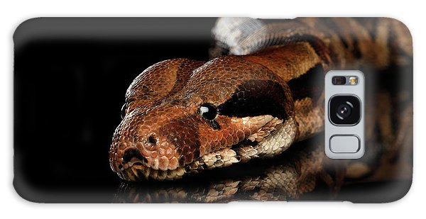 The Boa Constrictors, Isolated On Black Background Galaxy Case by Sergey Taran