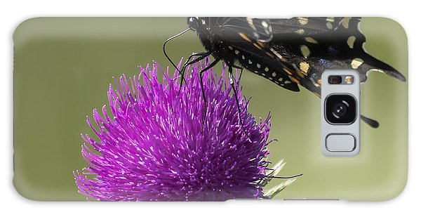 The Eastern Black Swallowtail  Galaxy Case