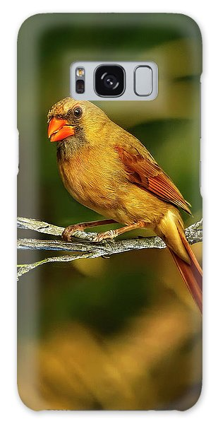 The Female Cardinal Galaxy Case