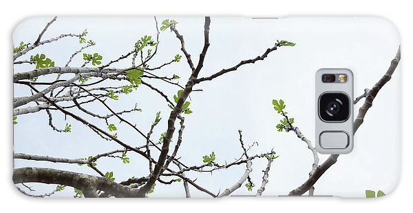 The Fig Tree Budding Galaxy Case