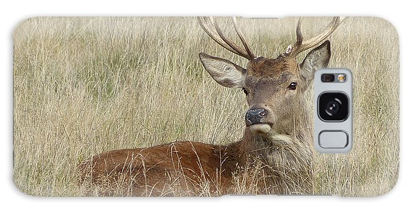 The Gentle Stag Galaxy Case by LemonArt Photography
