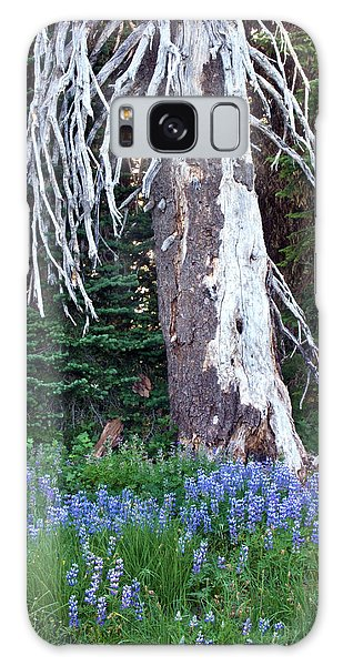 The Ghost Tree Galaxy Case