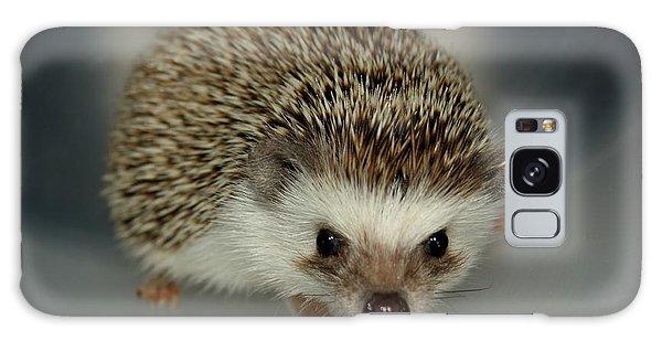 The Hedgehog Galaxy Case