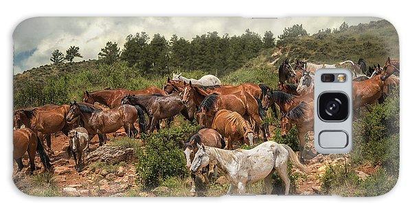 The Herd Galaxy Case