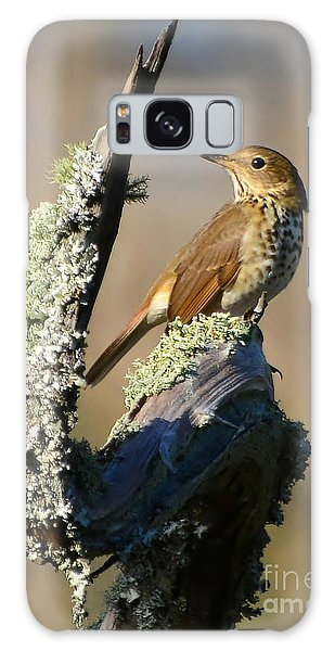 The Hermit Thrush Galaxy Case by Kathy Baccari