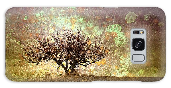 The Lone Tree Galaxy Case
