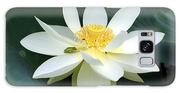 The Lotus Flower The Frog And The Bee Galaxy Case by Gary Crockett