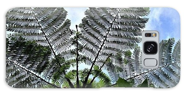Galaxy Case - Large Queen Fern - Puerto Viejo, Costa by In My Click Photography