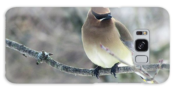 The Masked Cedar Waxwing Galaxy Case