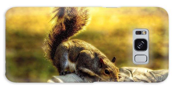 The Squirrel Galaxy Case