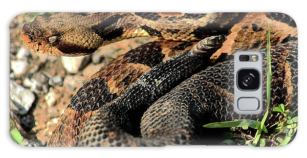 Galaxy Case featuring the photograph The Timber Rattlesnake by Kyle Findley