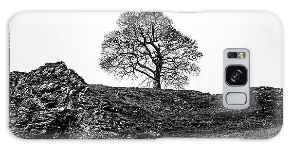 The Tree Galaxy Case