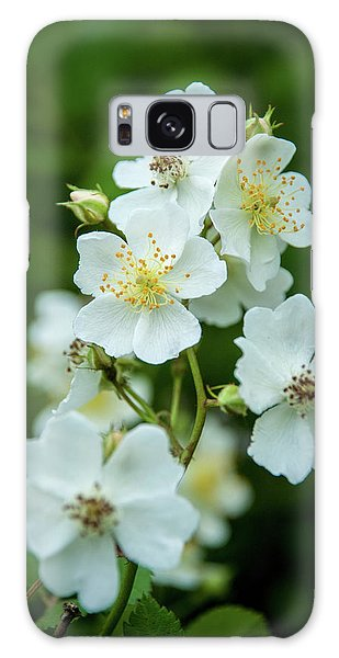 Galaxy Case featuring the photograph The Wild Rose by Mark Dodd