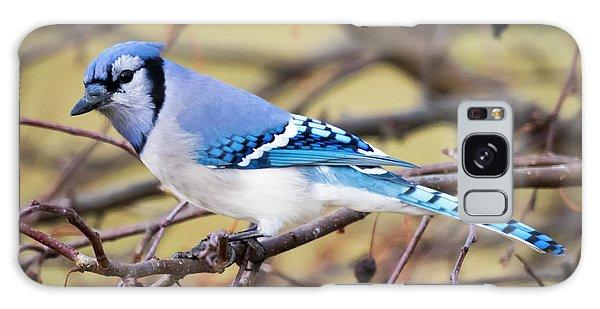 The Winter Blue Jay  Galaxy Case
