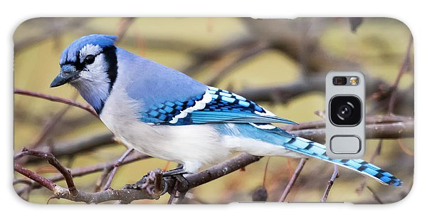 The Winter Blue Jay  Galaxy Case