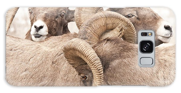 Three Bighorn Rams Galaxy Case