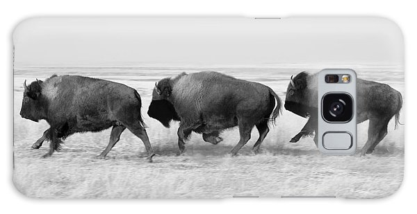 Three Buffalo In Black And White Galaxy Case