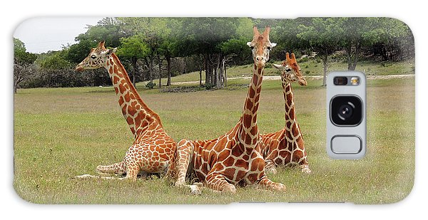 Three Giraffe At Fossil Rim Galaxy Case by Jayne Wilson