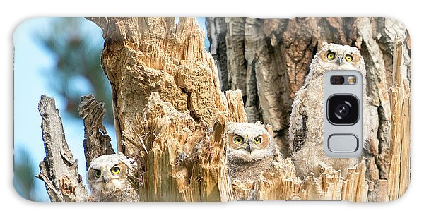 Three Great Horned Owl Babies Galaxy Case