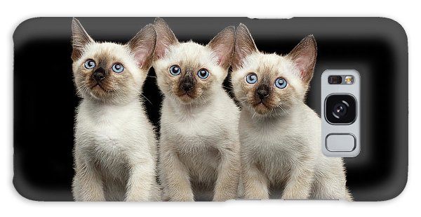 Cat Galaxy S8 Case - Three Kitty Of Breed Mekong Bobtail On Black Background by Sergey Taran