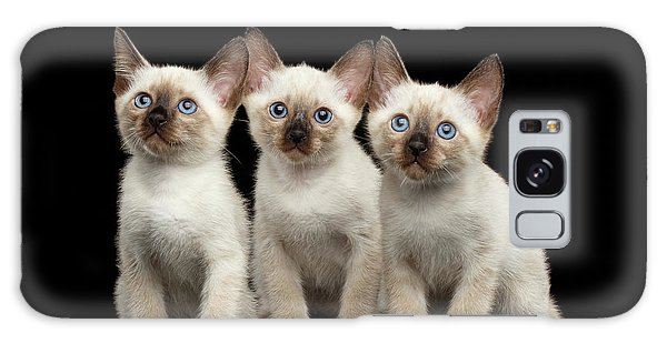 Three Kitty Of Breed Mekong Bobtail On Black Background Galaxy Case