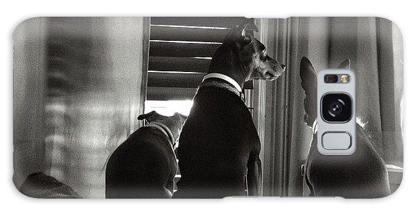 Three Min Pin Dogs Galaxy Case