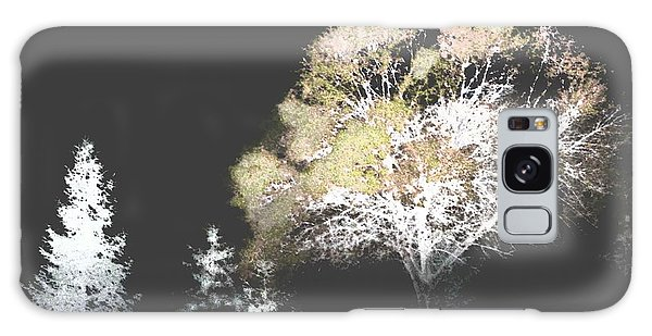 Three Trees In The Dark Galaxy Case
