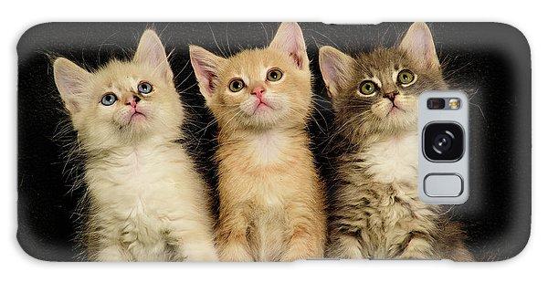 Three Wee Kittens Galaxy Case