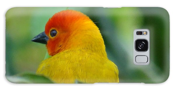 Through A Child's Eyes - Close Up Yellow And Orange Bird 2 Galaxy Case by Exploramum Exploramum