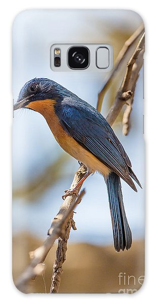 Tickells Blue Flycatcher, India Galaxy Case