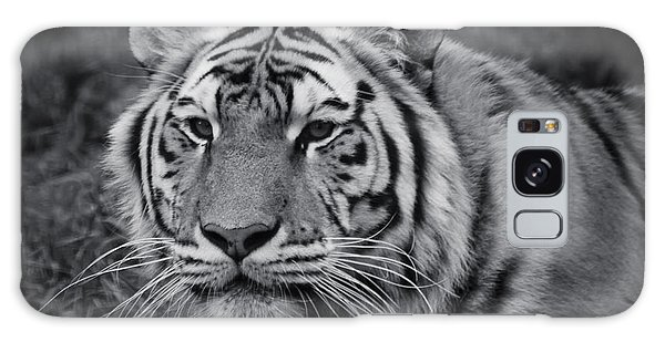 Tiger In The Grass Galaxy Case by Darcy Michaelchuk
