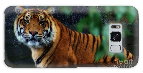 Tiger Land Galaxy Case
