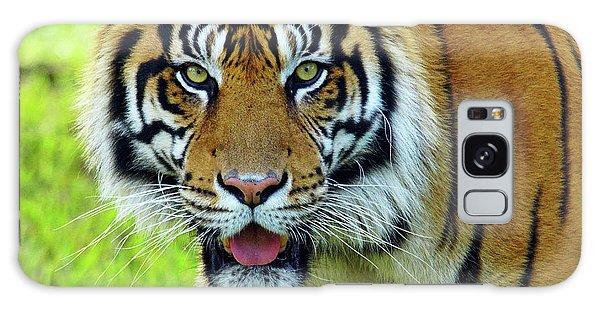 Tiger The Stare Galaxy Case