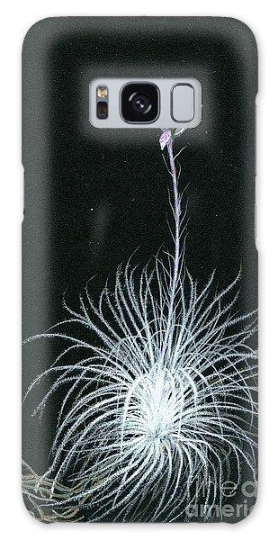 Tillandsia Tectorum Galaxy Case