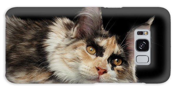 Tired Maine Coon Cat Lie On Black Background Galaxy Case