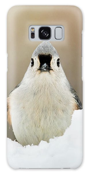 Tufted Titmouse In Snow Galaxy Case