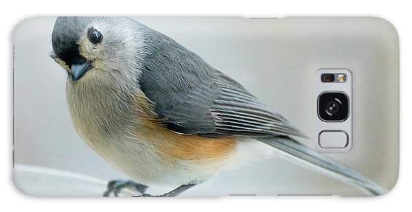Titmouse With Walnuts Galaxy Case