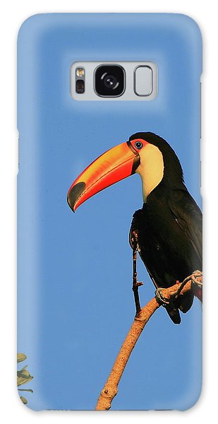 Toco Toucan Galaxy Case