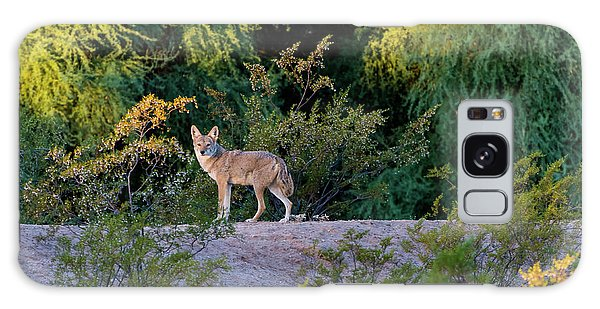 Today's Coyote Galaxy Case