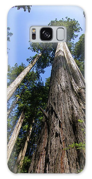 Towering Redwoods Galaxy Case