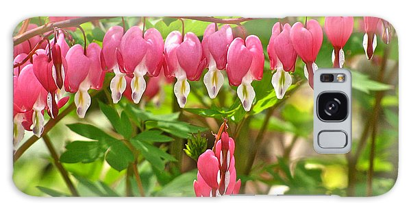 Trail Of Bleeding Hearts Galaxy Case