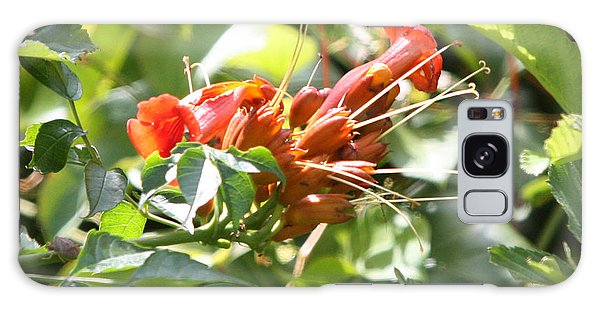 Tropical Trumpet Creeper Galaxy Case