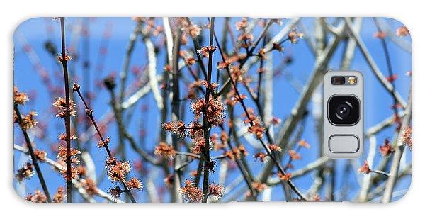 Aroostook County Galaxy Case - Tree Bud Closeup by William Tasker