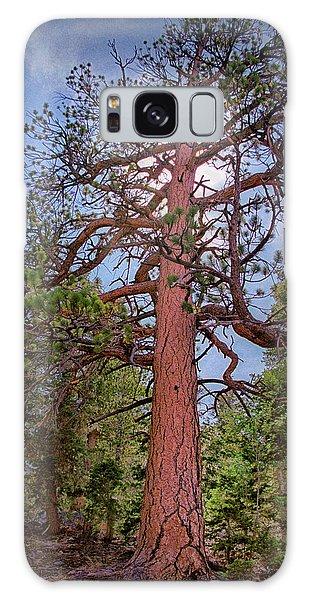Tree Cali Galaxy Case