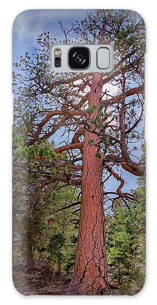 Tree Cali Galaxy Case