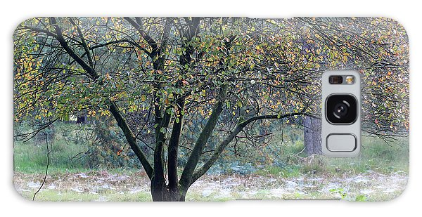 Tree In Forest With Autumn Colors Galaxy Case