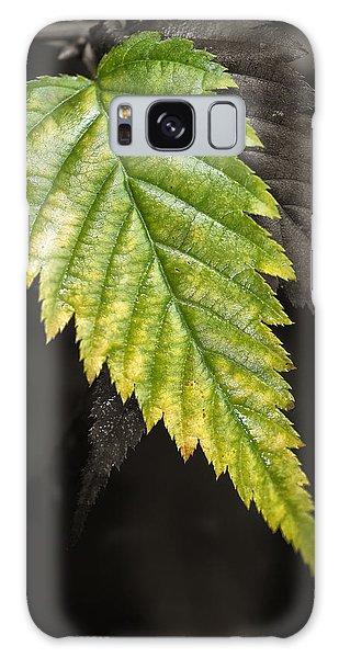 Tree Leaf Study  Galaxy Case