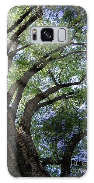 Tree Rays Galaxy Case