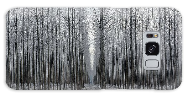 Tree Symmetry Galaxy Case